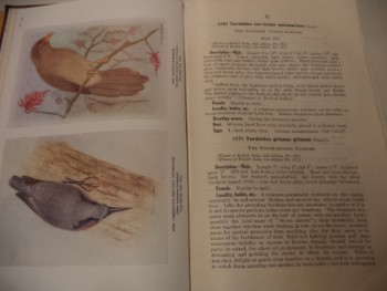 Image for The Birds of Southern India, including Madras, Malabar, Travancore, Cochin, Coorg and Mysore.